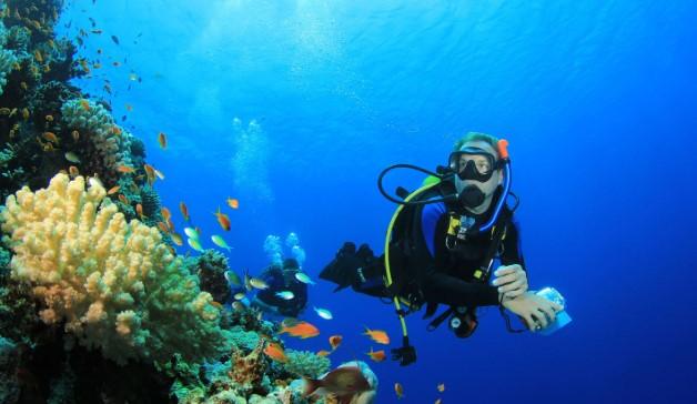 diving di tanjung benoa